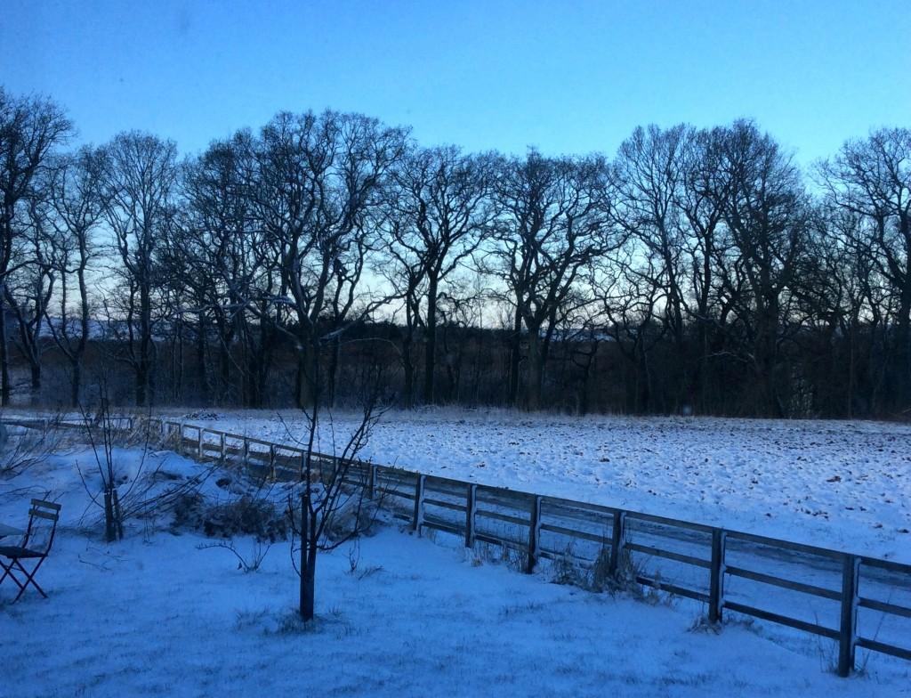 snowy-oaks